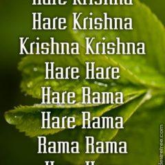 Hare Krishna Maha Mantra 229