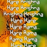 Hare Krishna Maha Mantra 347