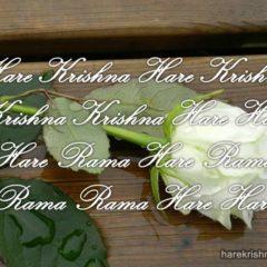 Hare Krishna Maha Mantra 048
