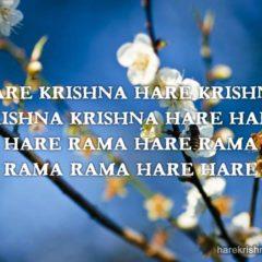 Hare Krishna Maha Mantra 207
