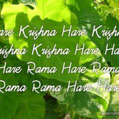 Hare Krishna Maha Mantra 247