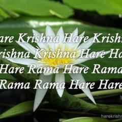 Hare Krishna Maha Mantra 317