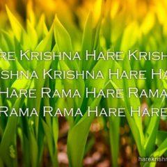 Hare Krishna Maha Mantra 331