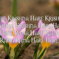Hare Krishna Maha Mantra 338