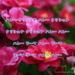 Hare Krishna Maha Mantra in Japanese 005