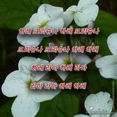 Hare Krishna Maha Mantra in Korean 002